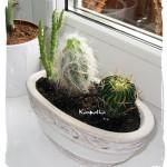 Sezon kaktusowy rozpoczęty!