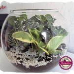 Mini ogródek w szklanej kuli