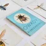 Galeria ramek z owadami