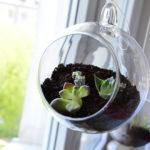 Sukulenty w szklanym ogródku