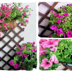 Balkon- kwiaty i warzywa